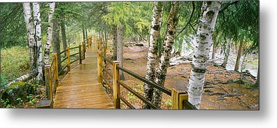 Boardwalk Along A River, Gooseberry Metal Print by Panoramic Images