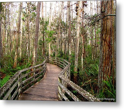 Metal Print featuring the photograph Boardwalk Through Corkscrew Swamp by Barbara Bowen