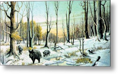Boars In Winter - Sold Metal Print by Florentina Popa