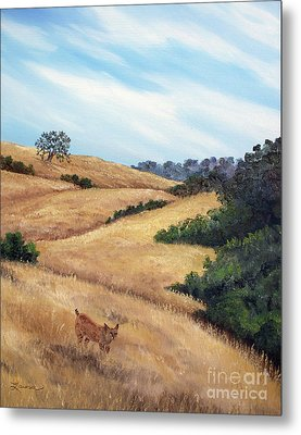 Bobcat At Rancho San Antonio Metal Print by Laura Iverson
