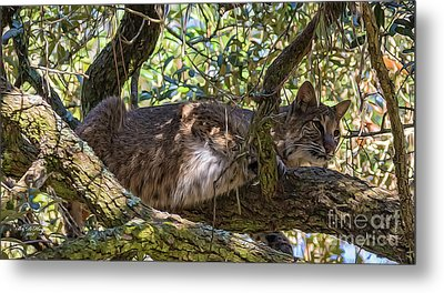 Bobcat Living High Metal Print by Bill And Deb Hayes