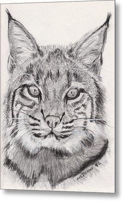Bobcat Metal Print by Marqueta Graham