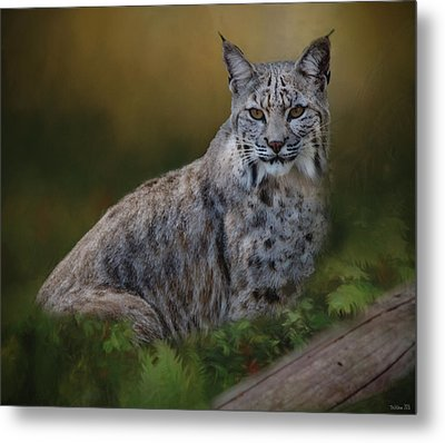 Bobcat On Alert Metal Print