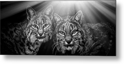 Bobcats Metal Print by Elaine Malott