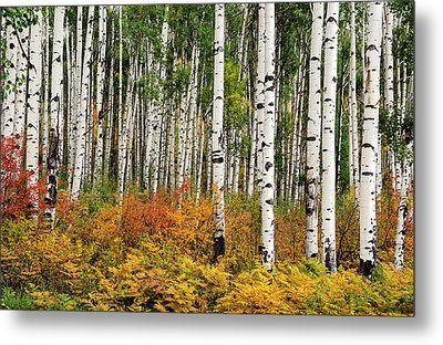 Metal Print featuring the photograph Bold And Magnificent Autumn by Tim Reaves