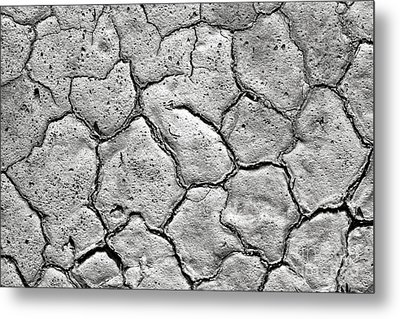 Metal Print featuring the photograph Bone Dry  by Olivier Le Queinec