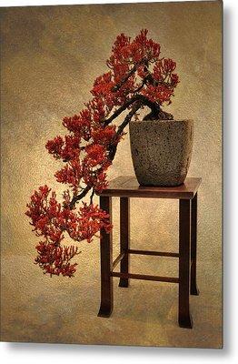 Bonsai Beauty Metal Print