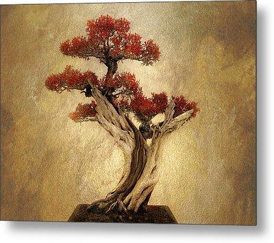 Bonsai Pine Metal Print