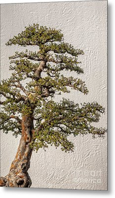 Bonsai Tree Metal Print