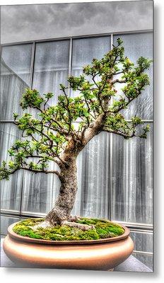 Bonsai Tree II Metal Print