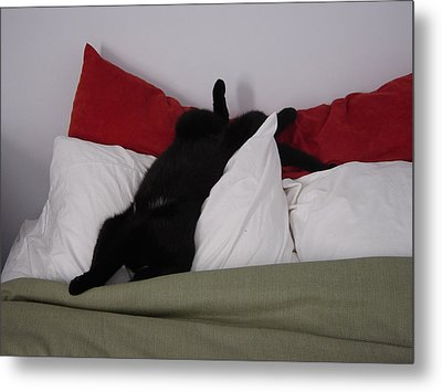 Boo Havin A Nap Metal Print by Marie Dunkley