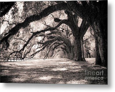 Boone Hall Plantation Live Oaks Metal Print by Dustin K Ryan