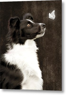 Border Collie Dog Watching Butterfly Metal Print