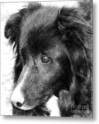 Border Collie In Pencil Metal Print