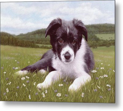 Border Collie Puppy Painting Metal Print