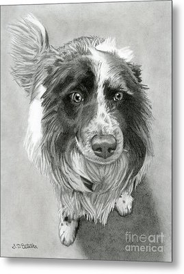 Border Collie Metal Print