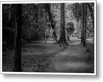 Bosque Do Silencio-campos Do Jordao-sp Metal Print