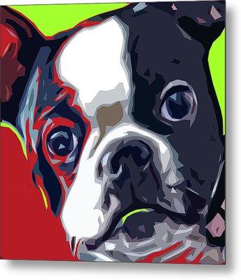 Boston Pup Metal Print