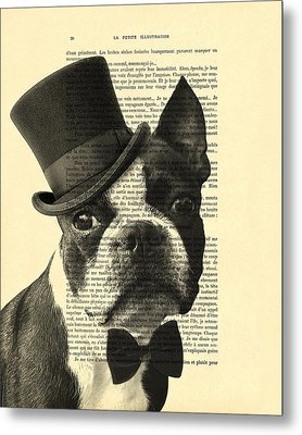 Boston Terrier, Animals In Clothes, Portrait Metal Print