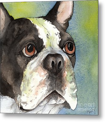 Boston Terrier Close Up Metal Print by Cherilynn Wood