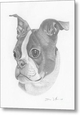 Boston Terrier Juno Metal Print