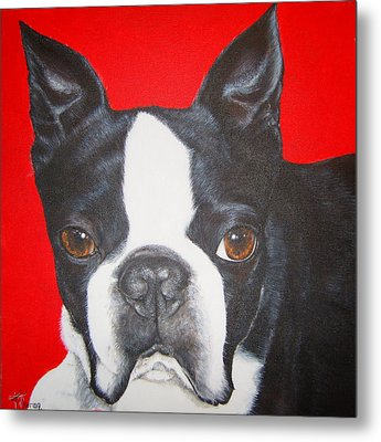 Boston Terrier Metal Print by Keran Sunaski Gilmore
