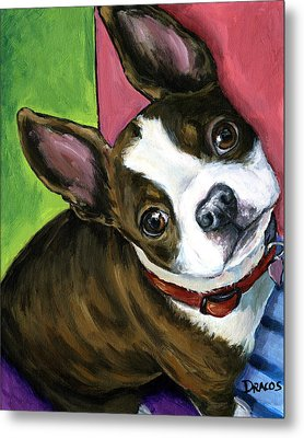 Boston Terrier Looking Up Metal Print by Dottie Dracos