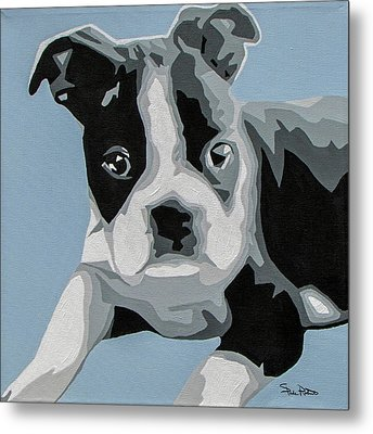 Boston Terrier Metal Print by Slade Roberts
