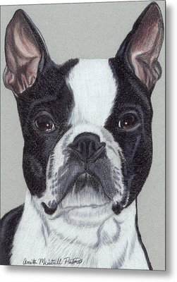 Boston Terrier Vignette Metal Print