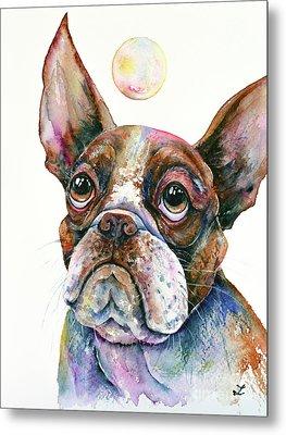 Metal Print featuring the painting Boston Terrier Watching A Soap Bubble by Zaira Dzhaubaeva