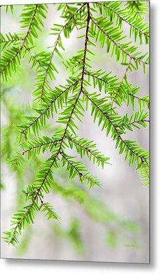 Metal Print featuring the photograph Botanical Abstract by Christina Rollo