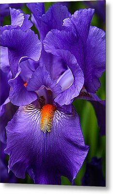 Botanical Beauty In Purple Metal Print by Toma Caul
