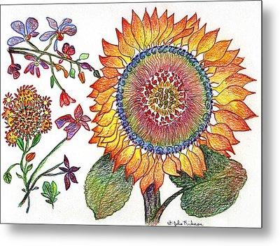 Botanical Flower-46 Sunflower Drawing Metal Print by Julie Richman
