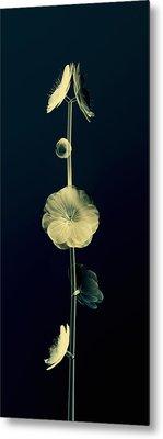 Botanical Study 6 Metal Print