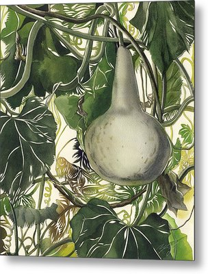 Bottle Squash With Grasshopper Metal Print by Alfred Ng