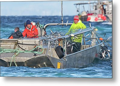 Metal Print featuring the photograph Bouncing Herring by Randy Hall