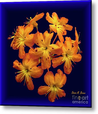 Metal Print featuring the digital art Bouquet In A Box by Donna Brown