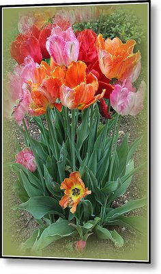 Bouquet Of Colorful Tulips Metal Print by Dora Sofia Caputo Photographic Art and Design