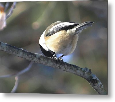 Bowing On A Branch Metal Print