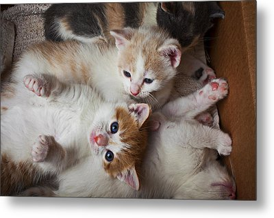 Box Full Of Kittens Metal Print