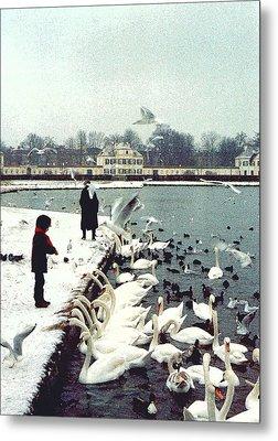 Boy Feeding Swans- Germany Metal Print by Nancy Mueller
