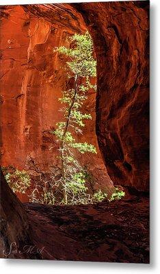 Boynton Canyon 07-034 Metal Print
