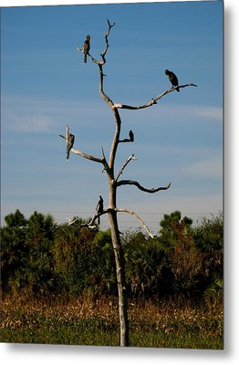 Branches For Birds Metal Print by Fanny Diaz