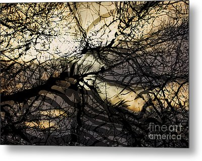 Branches Illuminated By Bright Sunshine, Double Exposed Image Metal Print by Nick Biemans