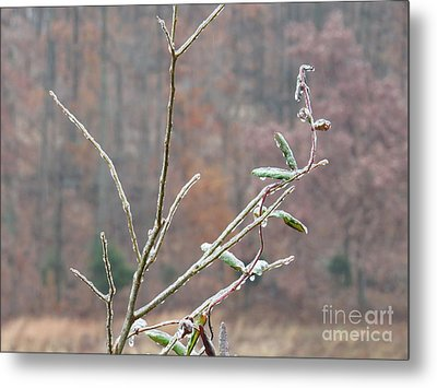 Branches In Ice Metal Print