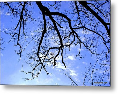 Branches Metal Print by Lois Lepisto