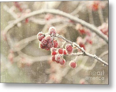 Branches With Early Winter Frost With Red Berries Metal Print by Sandra Cunningham