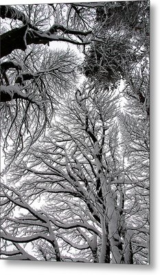 Branches With Snow Metal Print by Mark Denham