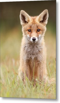 Brave New Fox Kit Metal Print by Roeselien Raimond