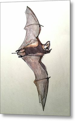 Brazilian Free-tailed Bat Metal Print